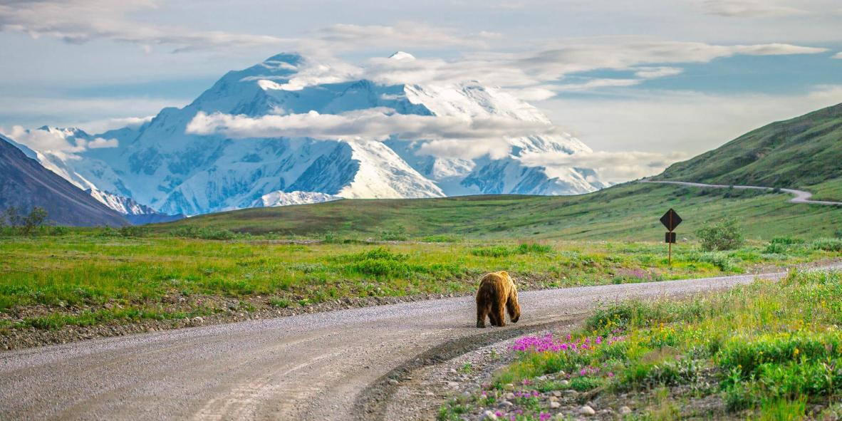 Keep an eye out for both grizzly bears and the Denali summit