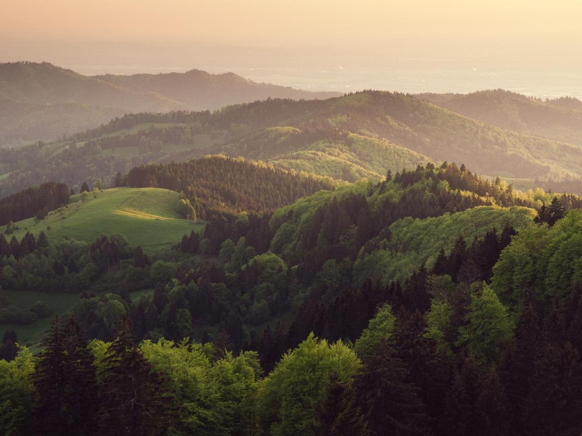 The Black Forest is full of thick pine, fir, beech and oak trees