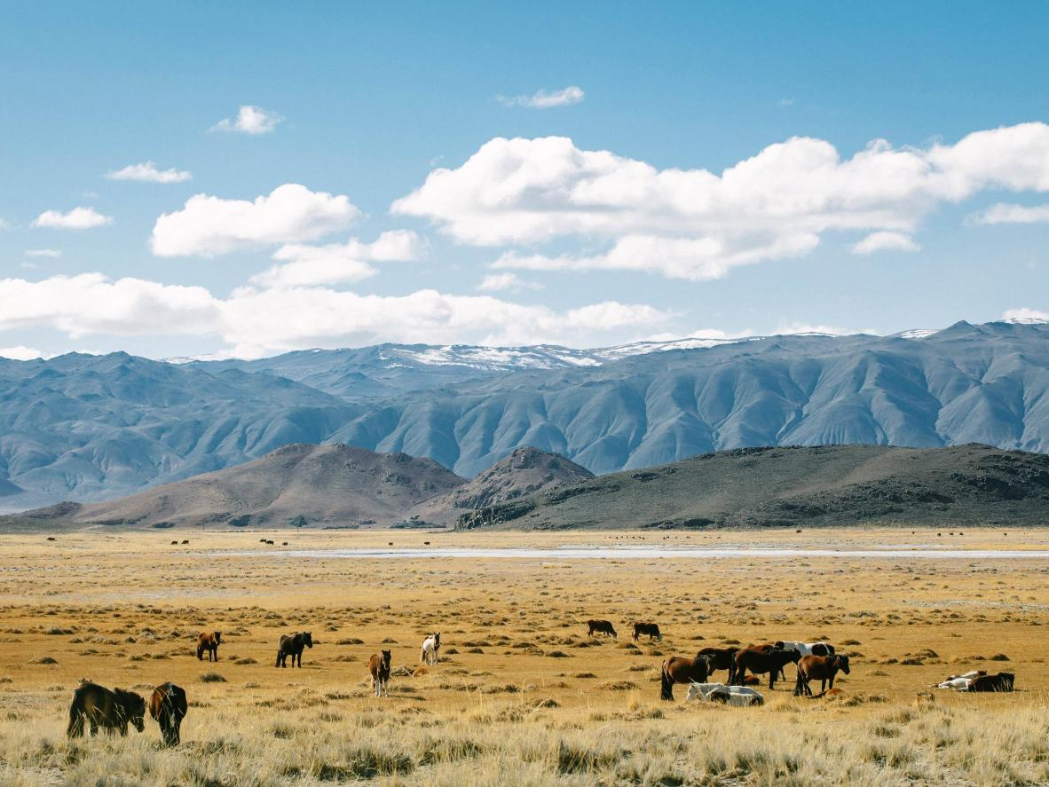 Mongolia's horse population outnumbers its human population
