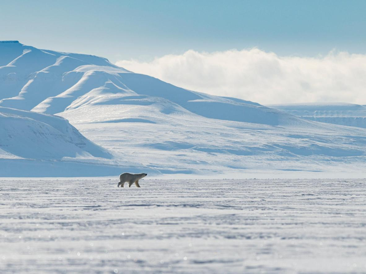 Get your chance to spot wild polar bears, walruses and narwhals