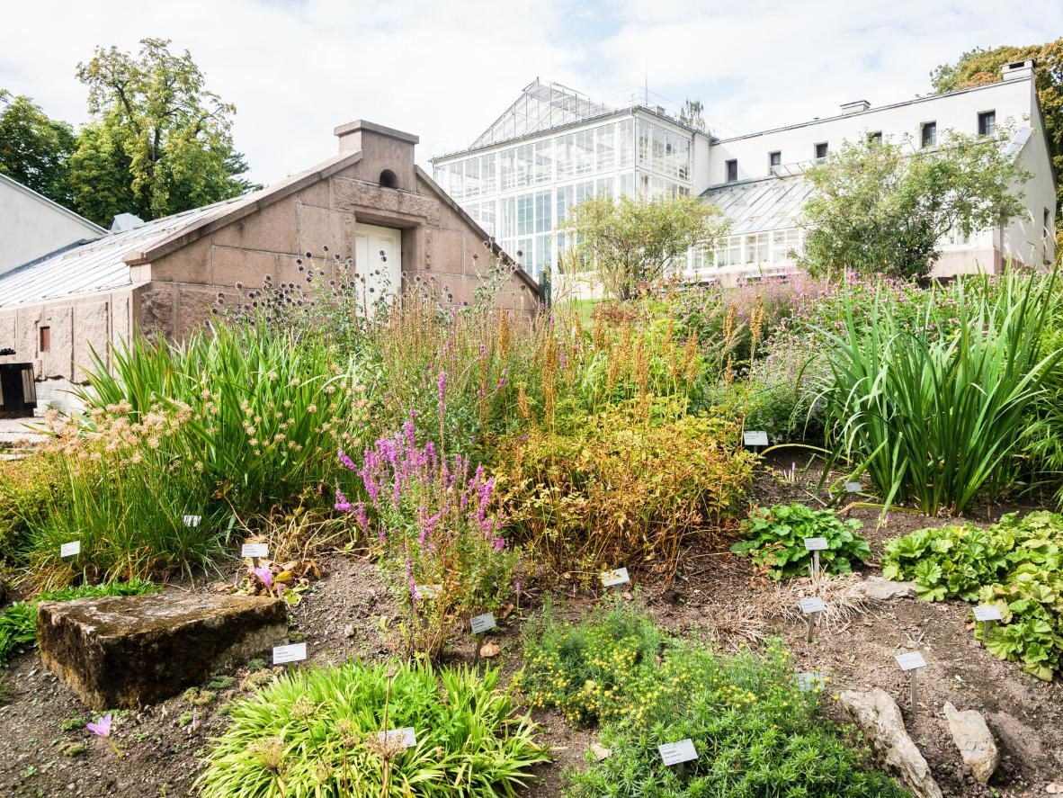 Explore the Rock Garden and Palm House in the Botanical Garden