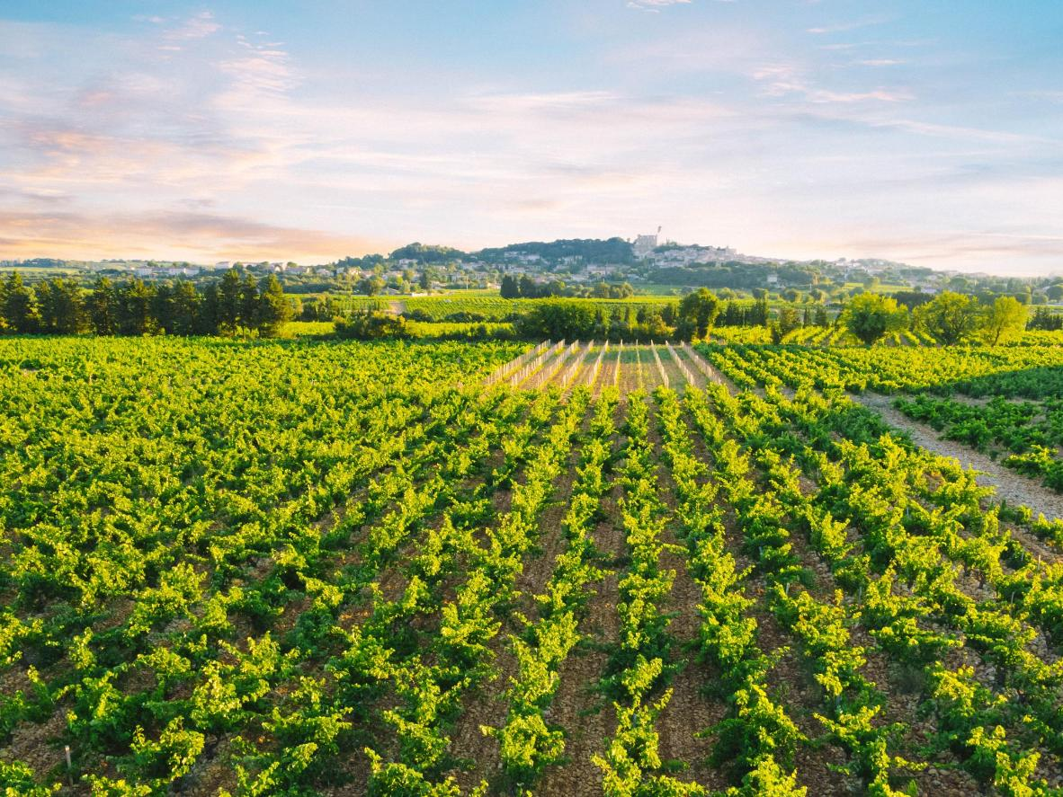 Learn all about what makes the area's red wine so special