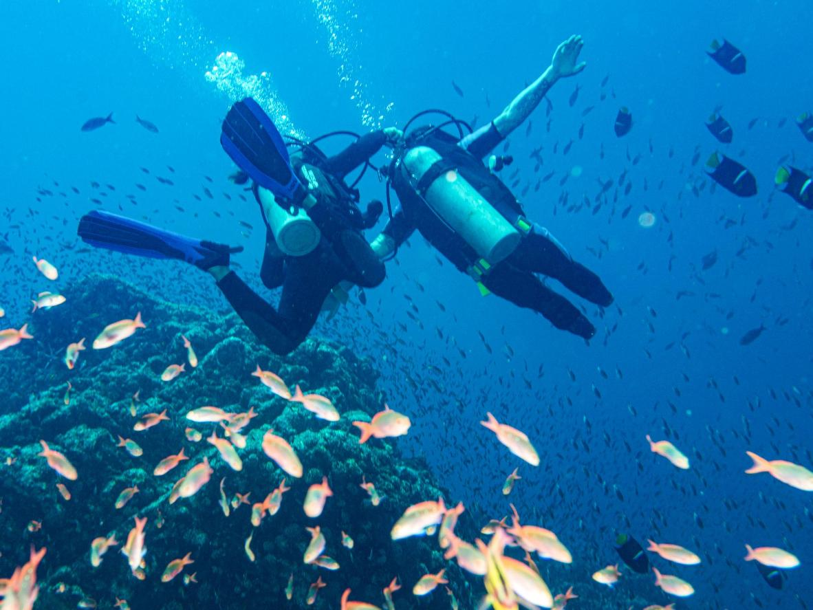 Explore reefs in Egypt