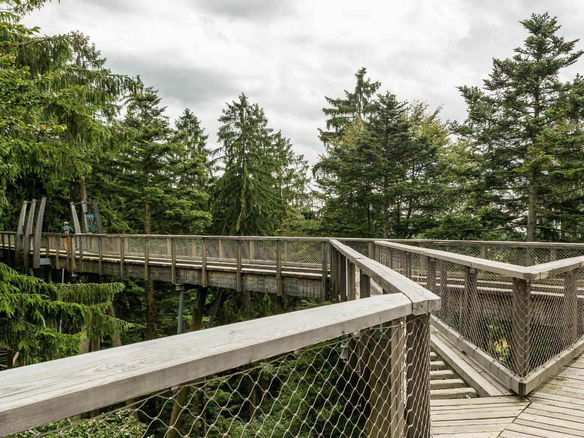 Go for a walk in the Bavarian Forest National Park on the (Treetop Walk)
