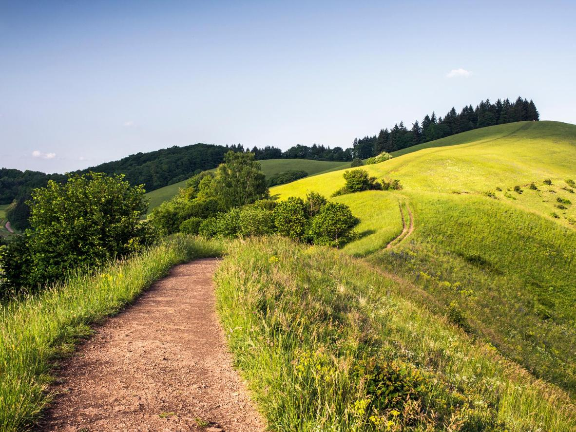 Cycle through verdant Black Forest landscapes near Freiburg