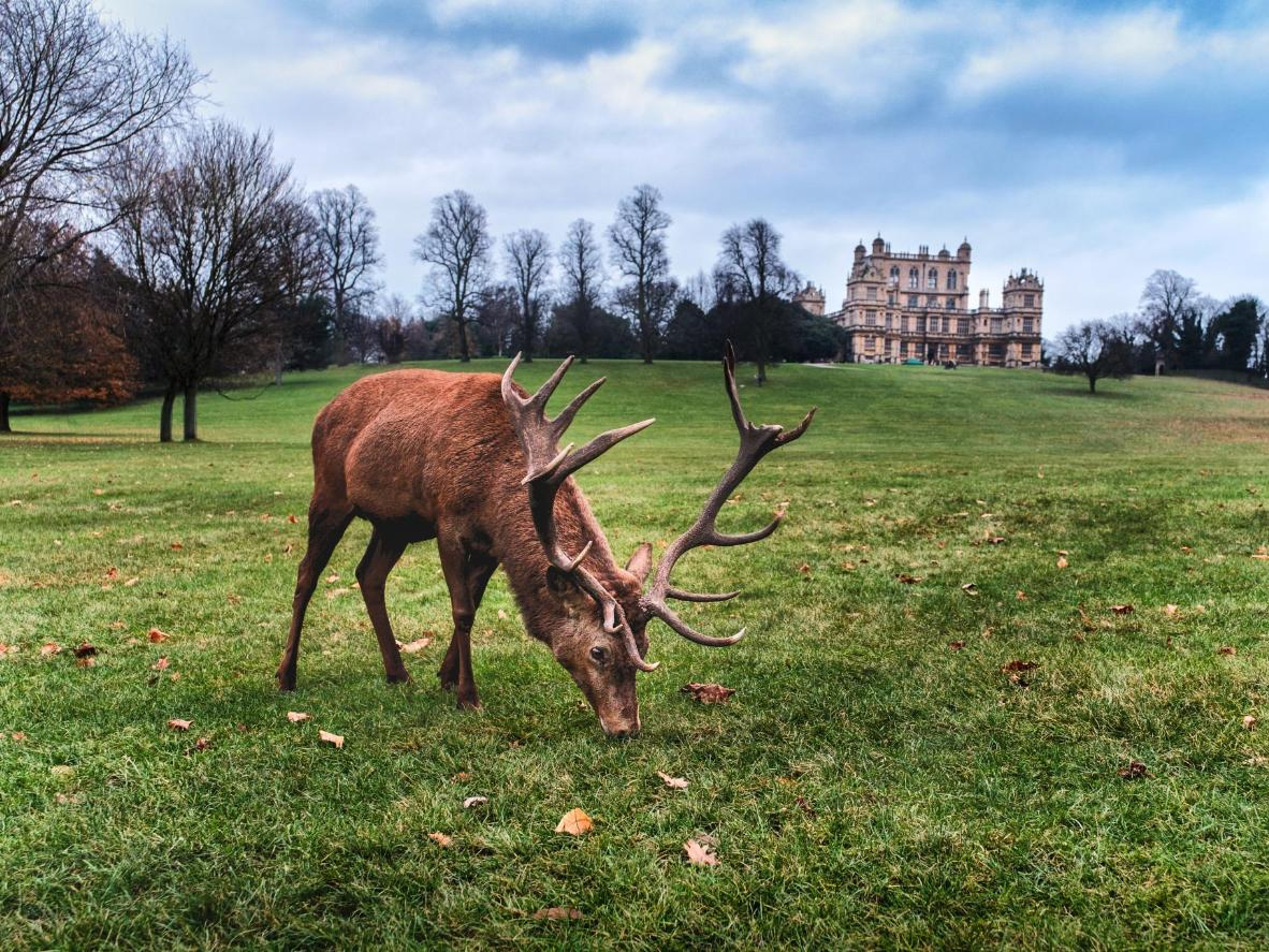 Admire the herds of deer at Grand Wollaton Hall