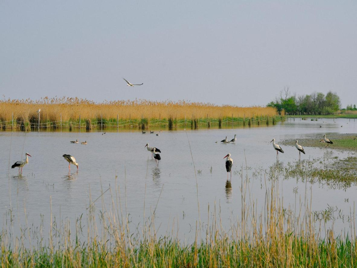 Recurring summer guests at Lake Neusiedl
