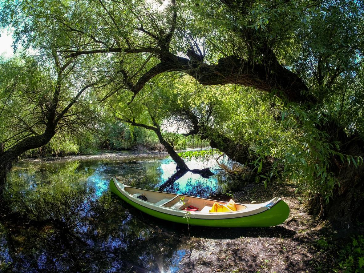 Discover the lush flora and special fauna in the Danube floodplains by canoe